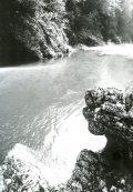 L'Astico, un torrente vicino a noi